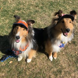 Shelties 2018