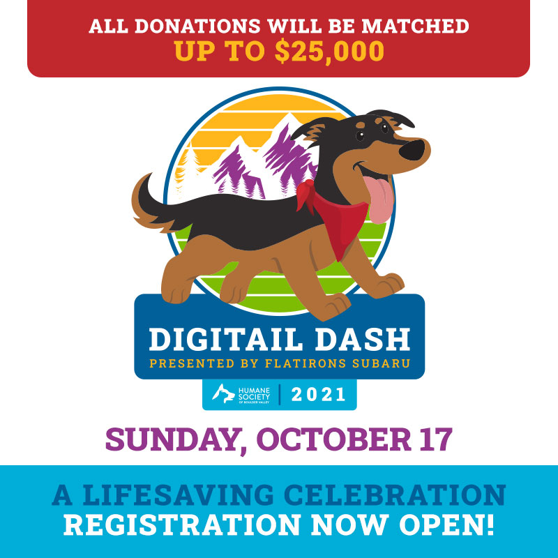 HSBV Digitail Dash - Donations Matched Image